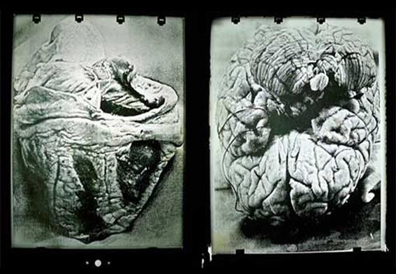 (Fotografía) Arte contemporáneo: arte cubano